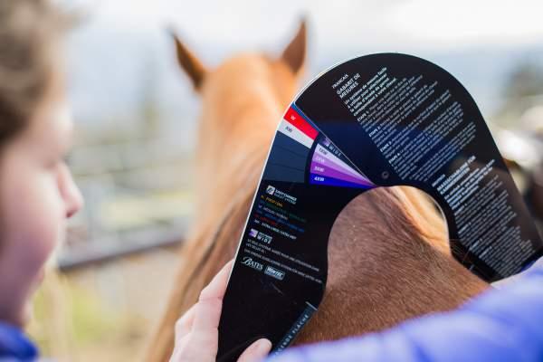 mesure wintec saddlefitting
